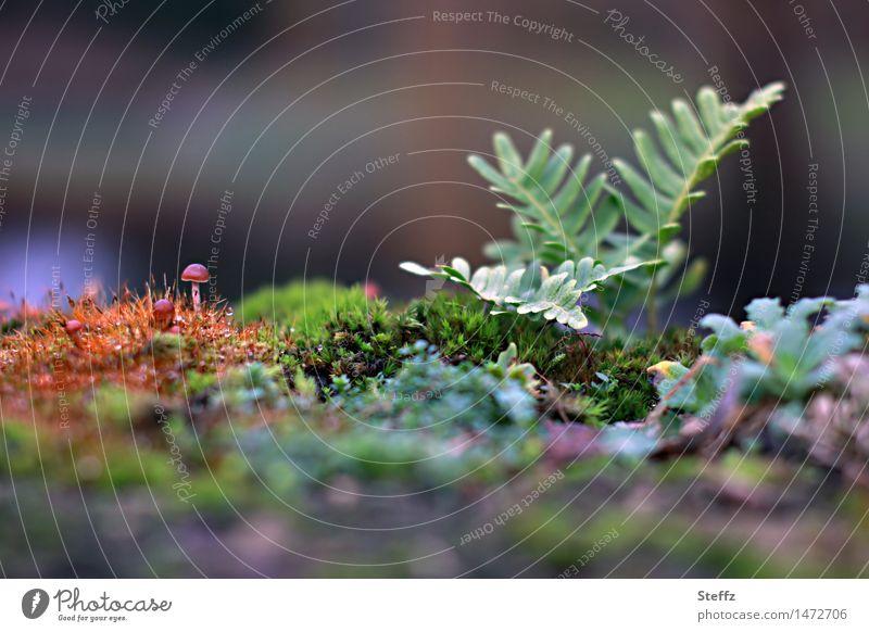 kleine Welt Umwelt Natur Pflanze Herbst Sträucher Moos Blatt Grünpflanze Wildpflanze Pilz Pilzhut Farn Wald Waldwiese Wachstum natürlich schön grau grün orange