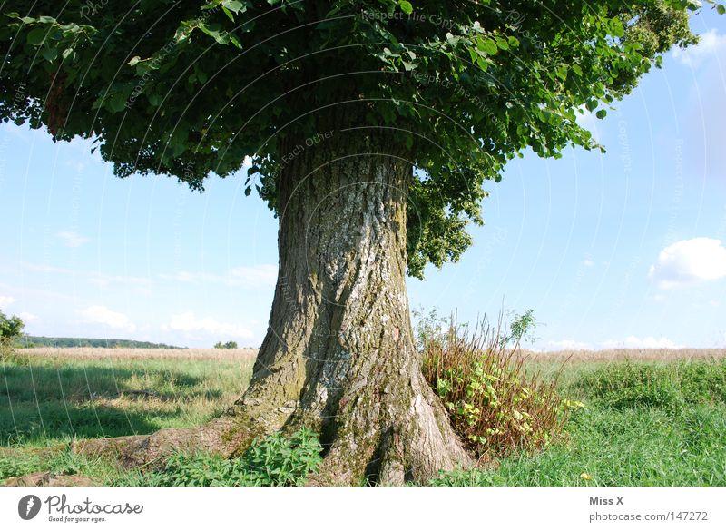 DAS IST EIN ZEICHEN!!!!! Himmel Natur alt grün Baum Sommer Freude Blatt ruhig Einsamkeit Freiheit Umwelt Landschaft Holz träumen groß