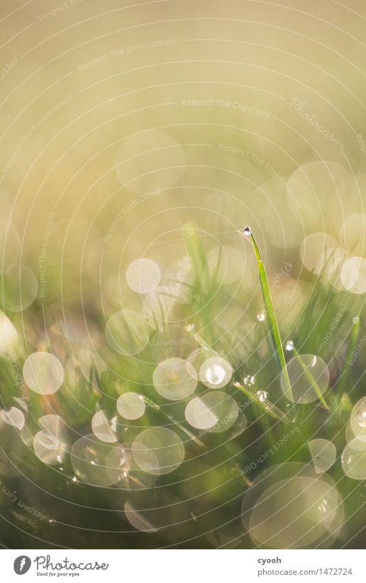 einer unter vielen Natur grün Wasser Leben Wiese Gras hell Regen glänzend Wachstum frisch leuchten Wassertropfen nass einzigartig rund