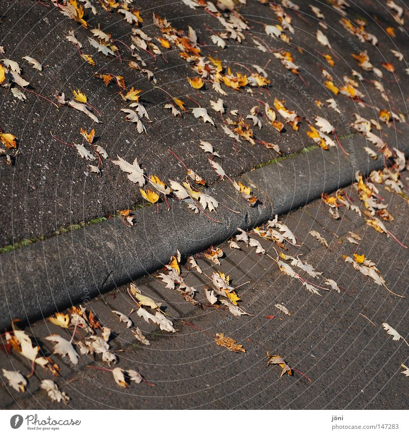 Blätterweg Straßenbau lang Unendlichkeit gerade fleißig hart kalt Wind Herbst Einsamkeit Teer Kies Blatt Nachbar gelb mehrfarbig Leben Schwäche rot schwarz grau