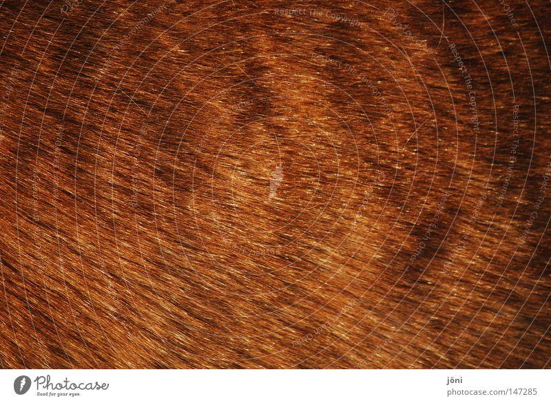 Winterfell Freude Tier Ferne kalt Wärme Haare & Frisuren Freiheit Energiewirtschaft Wind Sauberkeit Landwirtschaft Pferd Bauernhof Fell Physik