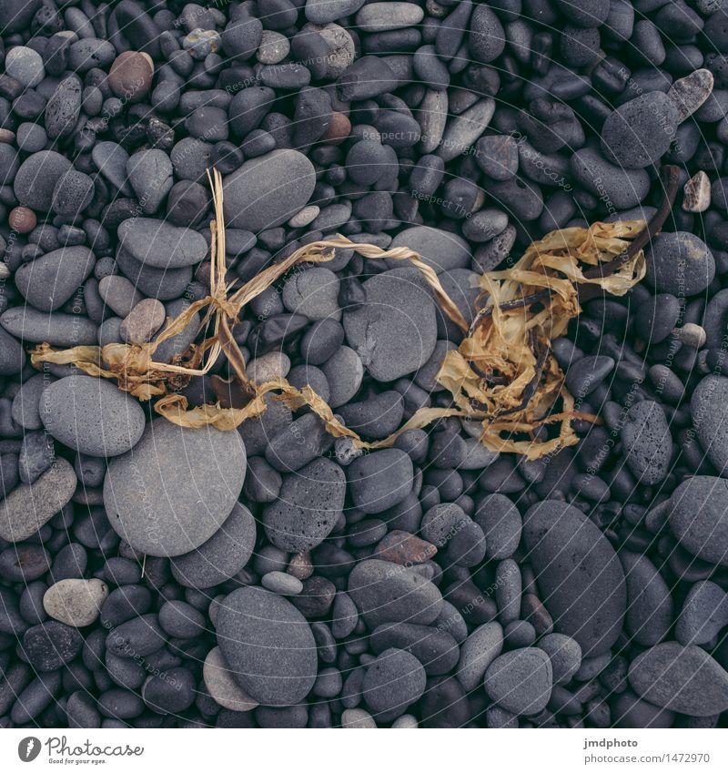 Strandgut Natur Ferien & Urlaub & Reisen Pflanze Meer Landschaft schwarz Küste Stein Erde Ausflug Abenteuer Urelemente Seeufer trocken entdecken