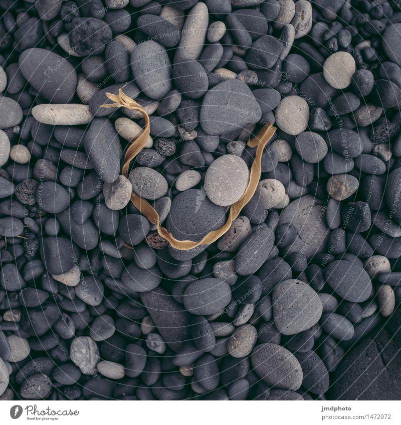 Strandgut Natur Pflanze Meer Landschaft schwarz kalt Küste Stein Felsen Erde rund weich Urelemente Island vertrocknet
