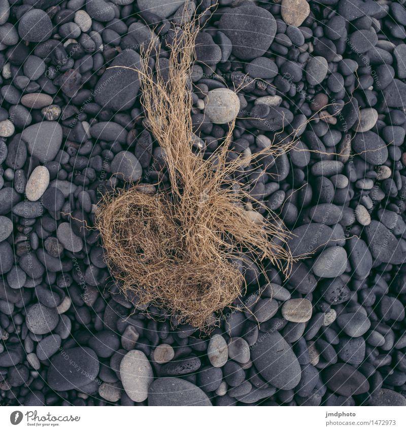 Strandgut Ferien & Urlaub & Reisen Abenteuer Expedition Camping Sommerurlaub Meer Insel Natur Landschaft Pflanze Urelemente Erde Sand Sturm Küste Seeufer Bucht