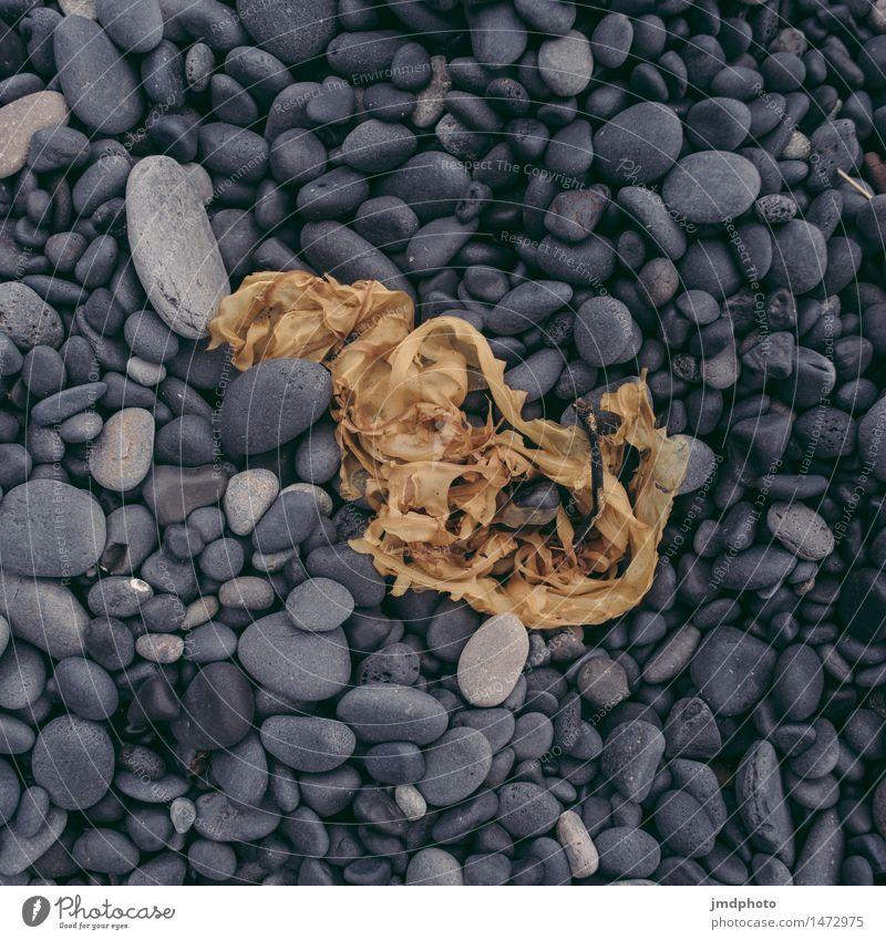 Strandgut Pflanze Landschaft schwarz natürlich Küste Freiheit Stein Sand Erde Ausflug Abenteuer Urelemente Seeufer Flussufer Island