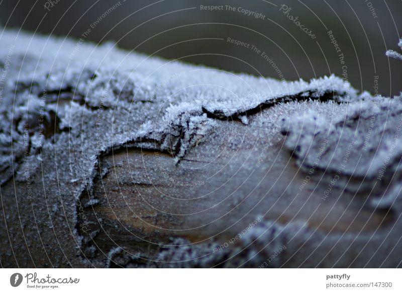 Fr0sty BaRk Baumrinde Eis Frost Raureif kalt Holz Baumstamm Herbst Winter Makroaufnahme Nahaufnahme Holzmehl baumfällarbeiten Schnee