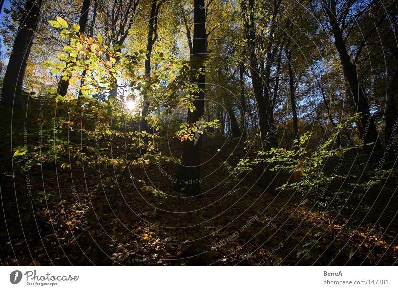 Herbst Sonne Berge u. Gebirge Natur Landschaft Baum Sträucher Blatt Wald Hügel blau braun gelb grün Lichtspiel Beleuchtung Strahlung strahlend untergehen