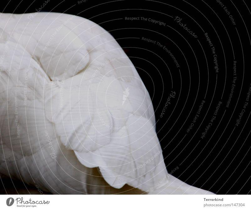 Miss.Arroganz. Wasser weiß schön Meer schwarz Tier Herbst Freiheit See Wellen Vogel Haut fliegen frei Feder Fluss