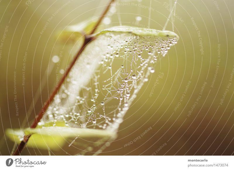 micro vernetzung Umwelt Natur Luft Wasser Wassertropfen Herbst Winter Pflanze Sträucher Blatt Grünpflanze Wildpflanze dünn authentisch Flüssigkeit frisch