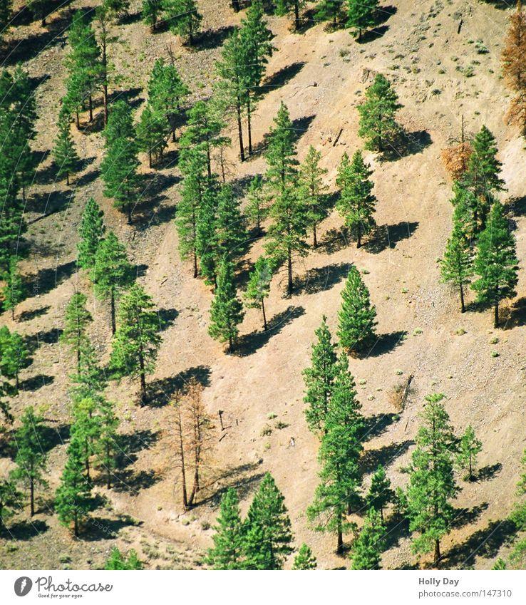 Hanglage Baum grün Sommer Wald hell braun Erde Tanne Kanada Baumstamm Berghang steil Straßenrand August Sonnenlicht Nadelwald