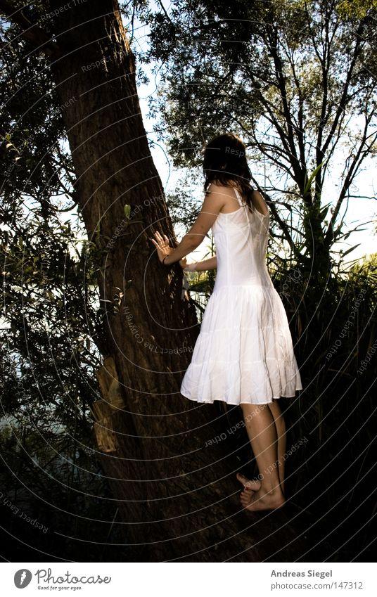 Alice, bist du's? Frau Jugendliche weiß Baum Sommer Wald feminin Fuß See Rücken Kleid Klettern festhalten Seeufer Barfuß