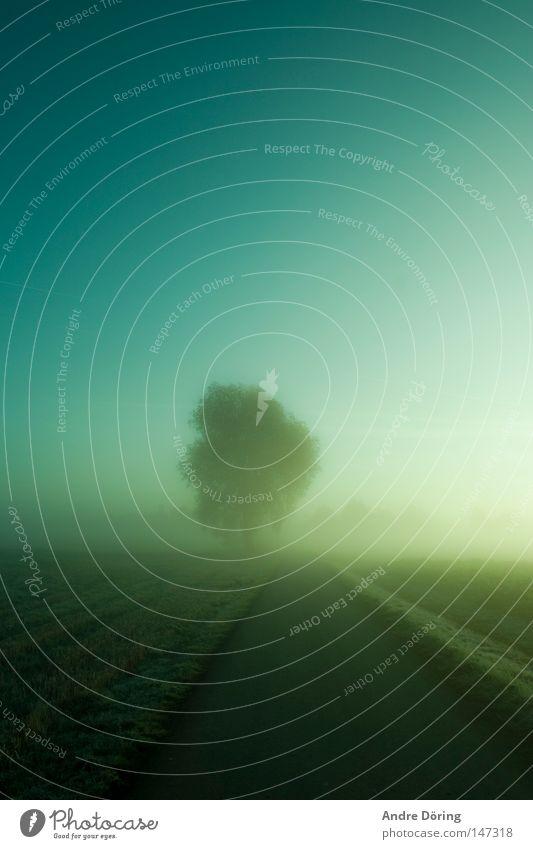 Wenn der Tag erwacht Morgen Oktober Nebel Nebelbank Morgennebel Raureif Herbst eingehüllt umhüllen unklar Unschärfe Wiese Baum Himmel Klarheit kalt Licht