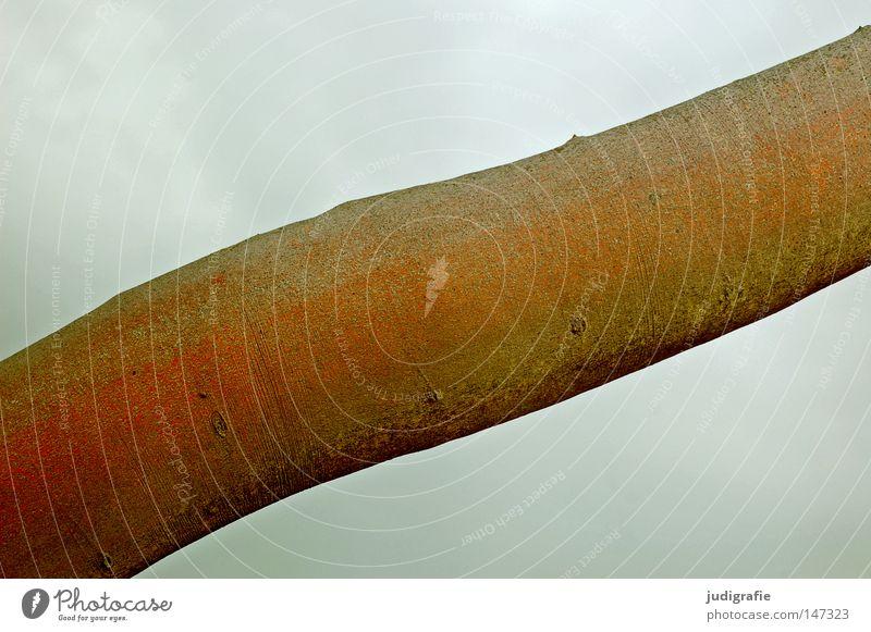 Buche Himmel Natur Baum Farbe Wolken Umwelt Holz Küste grau Baumstamm Baumrinde schlechtes Wetter Buche Laubbaum Weststrand Rotbuche