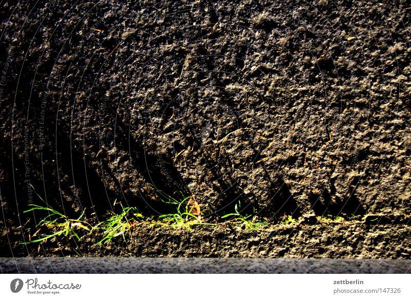 Gras Pflanze Stein Kraft leer Wachstum Platz Vergänglichkeit Verkehrswege Parkplatz Furche Lücke Kieselsteine Reifezeit