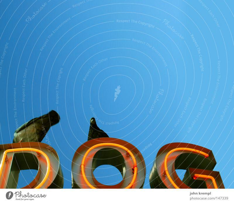 dog Hund Himmel blau rot Vogel Gastronomie Werbung Taube Blauer Himmel strahlend Leuchtreklame Imbiss Hotdog