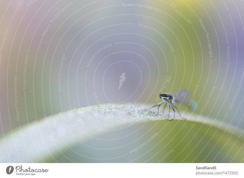 Blauschwanz-Damselfly Umwelt Natur Tier Wassertropfen Pflanze Blatt Garten Park Wildtier Tiergesicht Flügel 1 Frühlingsgefühle schön Überraschung grün Libelle