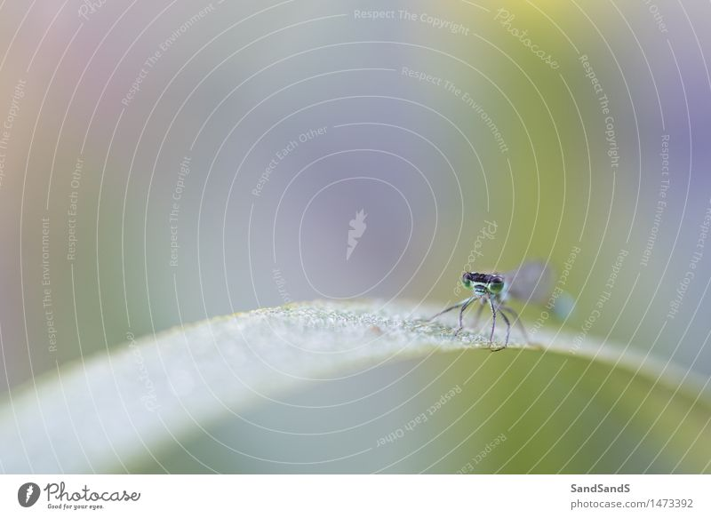 Natur Pflanze grün schön Blatt Tier Umwelt Garten Park Wildtier Wassertropfen Flügel Insekt Überraschung Tiergesicht Frühlingsgefühle