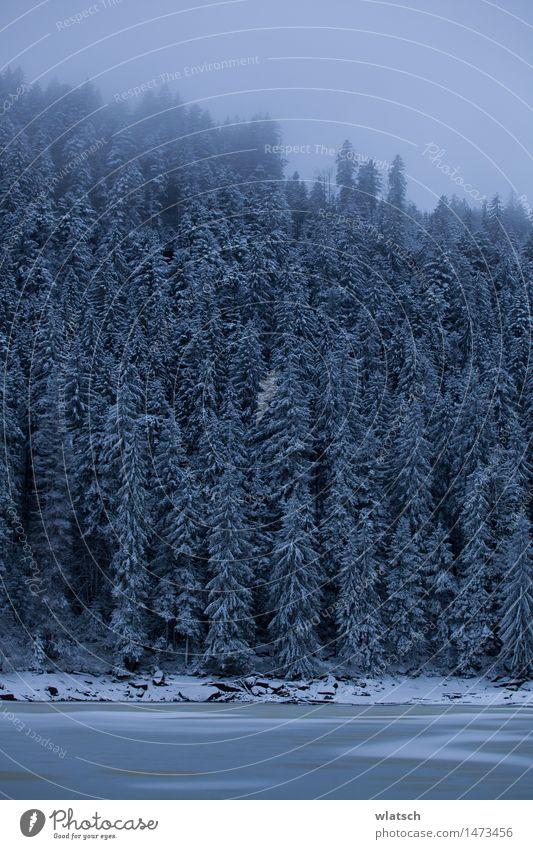 Frozen Spigot Natur Landschaft schlechtes Wetter Eis Frost Schnee Schneefall Wald Urwald authentisch bedrohlich kalt blau Farbfoto Außenaufnahme