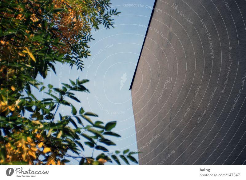 sonntags (vor einer Woche) Baum Haus Herbst Wand Mauer Park Hinterhof Vogelbeerbaum