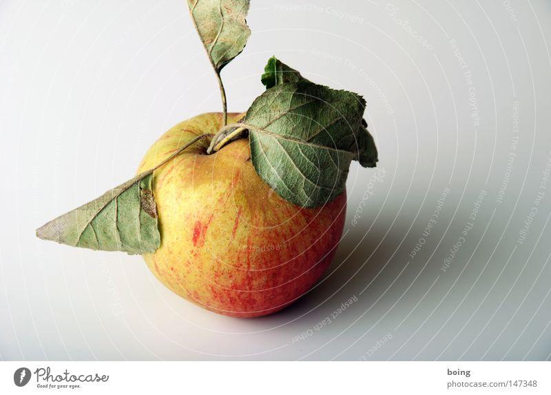 Öpfl Apfel Frucht Blatt Apfelbaum Bioprodukte Biologische Landwirtschaft biologisch Obstbau Gesundheit ungespritzt mit optischen Fehlern von der Streuobstwiese