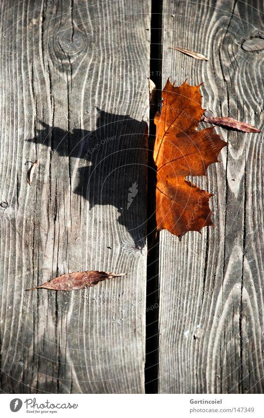Lichtspiel Umwelt Natur Pflanze Sonnenlicht Herbst Baum Blatt Holz dunkel braun rot schwarz Farbe getrocknet vertrocknet Astloch orange Jahreszeiten Stillleben