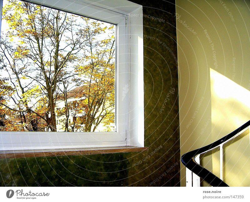 Willkommen Herr Herbst Baum ruhig Herbst Fenster Wärme Treppe Physik Idylle Licht