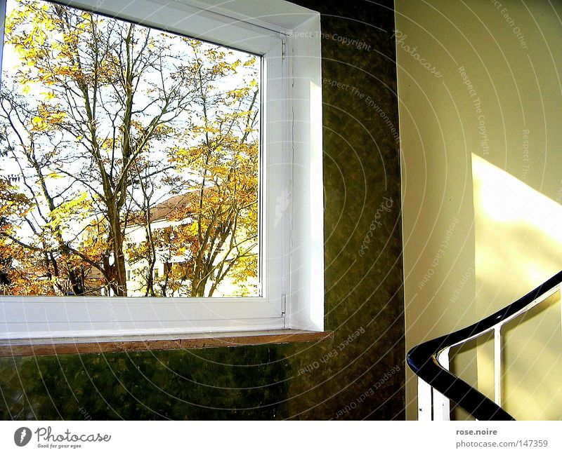Willkommen Herr Herbst Licht ruhig Physik Baum Fenster Idylle Wärme Treppe