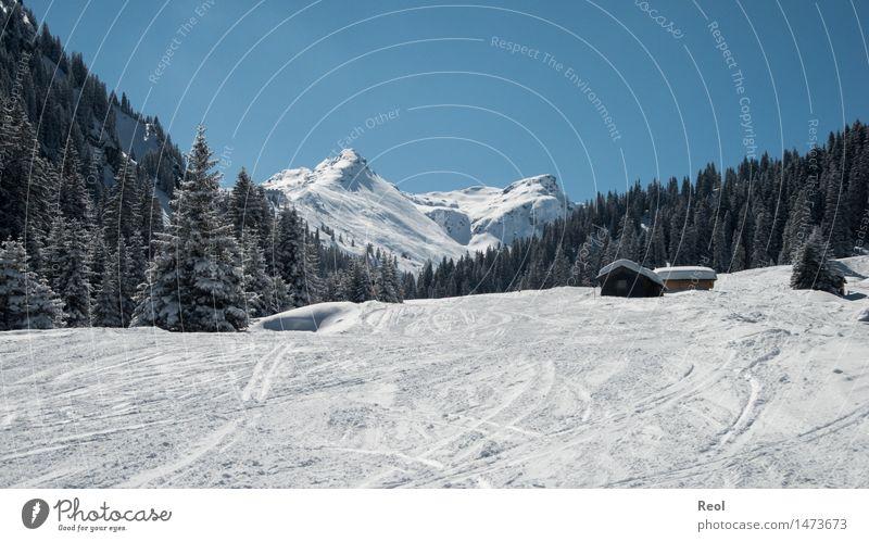 Märchenwald Freizeit & Hobby Umwelt Natur Landschaft Himmel Wolkenloser Himmel Sonnenlicht Winter Klimawandel Wetter Schönes Wetter Schnee Tanne Wald Alpen