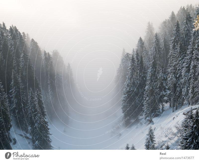 Nebeltal Natur Landschaft Urelemente Winter Schönes Wetter Schnee Pflanze Baum Tanne Wald Berge u. Gebirge Nadelwald Tal dunkel schwarz weiß ruhig Nebelwald