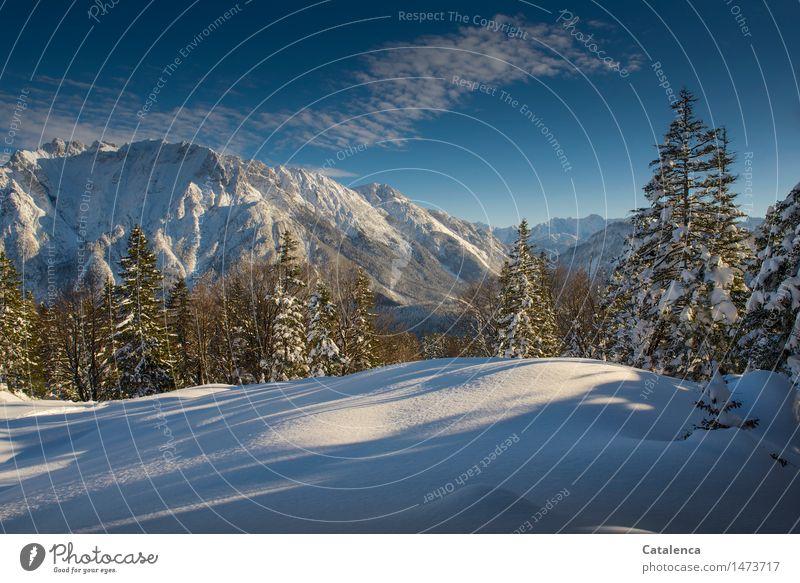 Winterfreude Schnee Winterurlaub Berge u. Gebirge wandern Skier Umwelt Natur Landschaft Pflanze Wolken Horizont Sonnenlicht Schönes Wetter Baum Fichten Wald