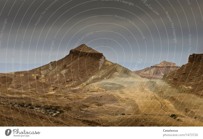 In der farbigen Wüste wandern Fahrrad Umwelt Natur Landschaft Tier Erde Sand Wolken Winter Klimawandel schlechtes Wetter Dürre Hügel Felsen Negev Vogel