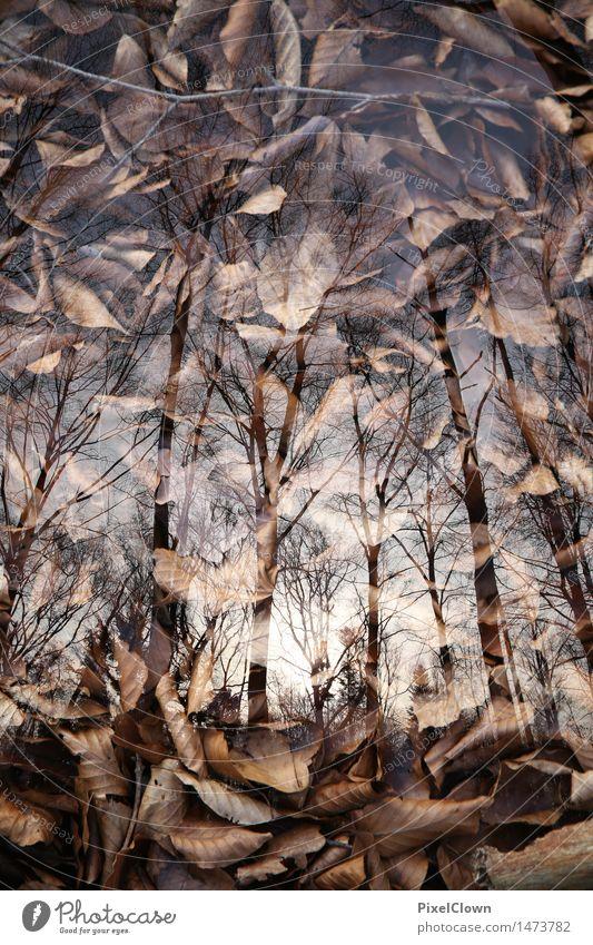 Wald Natur Ferien & Urlaub & Reisen Pflanze schön Baum Landschaft Blatt Tier dunkel Gefühle Stil Holz braun Park träumen