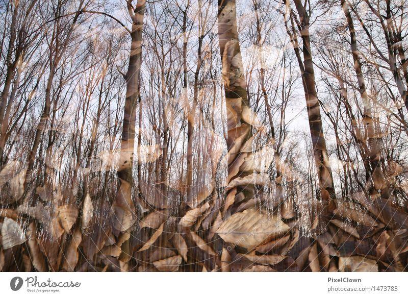 Wald Natur Ferien & Urlaub & Reisen Pflanze schön Baum Landschaft Blatt Tier Umwelt Herbst braun Stimmung Park Tourismus Wachstum