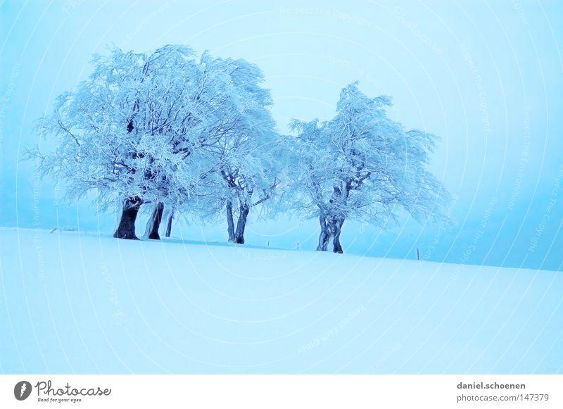 neue Weihnachtskarte 2 Himmel Natur blau weiß Baum Ferien & Urlaub & Reisen Winter Einsamkeit kalt Schnee Berge u. Gebirge Horizont Deutschland Wetter