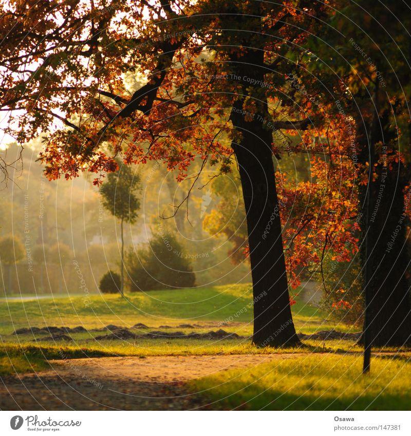 Potsdam08 | Herbst Baum grün rot ruhig Blatt schwarz Wald Park braun Brandenburg Baumstamm Dunst Schlosspark