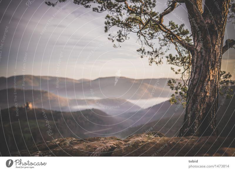 Ausblick Natur Landschaft Pflanze Himmel Wolken Horizont Sonnenaufgang Sonnenuntergang Schönes Wetter Nebel Baum Wiese Wald Hügel Felsen Gipfel Ruine Ferne