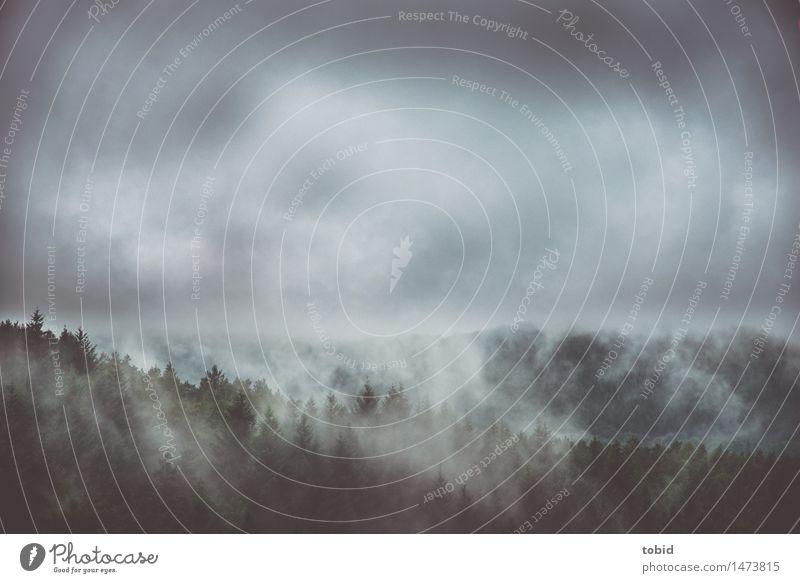 Doofes Wetter Natur Landschaft Pflanze Wolken schlechtes Wetter Nebel Baum Wald Hügel bedrohlich dunkel Endzeitstimmung mystisch Nebelschleier Nebelstimmung