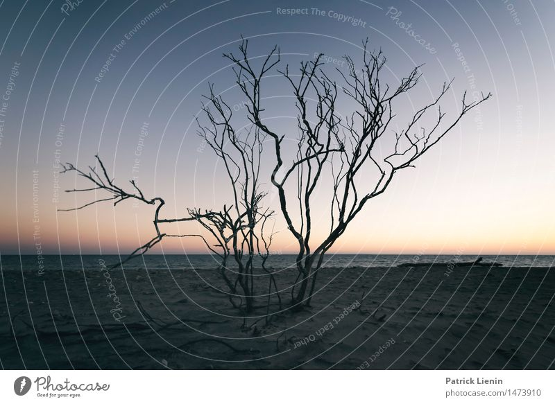Abendland Himmel Natur Ferien & Urlaub & Reisen Pflanze schön Sommer Baum Meer Landschaft Strand Küste Freiheit träumen Park Wetter Aussicht