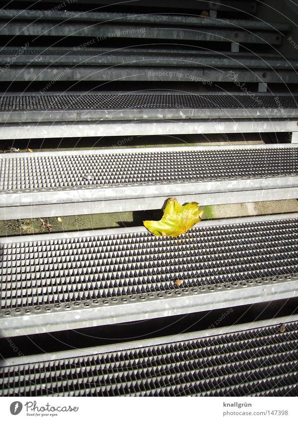 Einzelgänger Natur grün Blatt gelb dunkel Herbst hell Metall Treppe Vergänglichkeit Jahreszeiten einzeln Gitter Eindruck