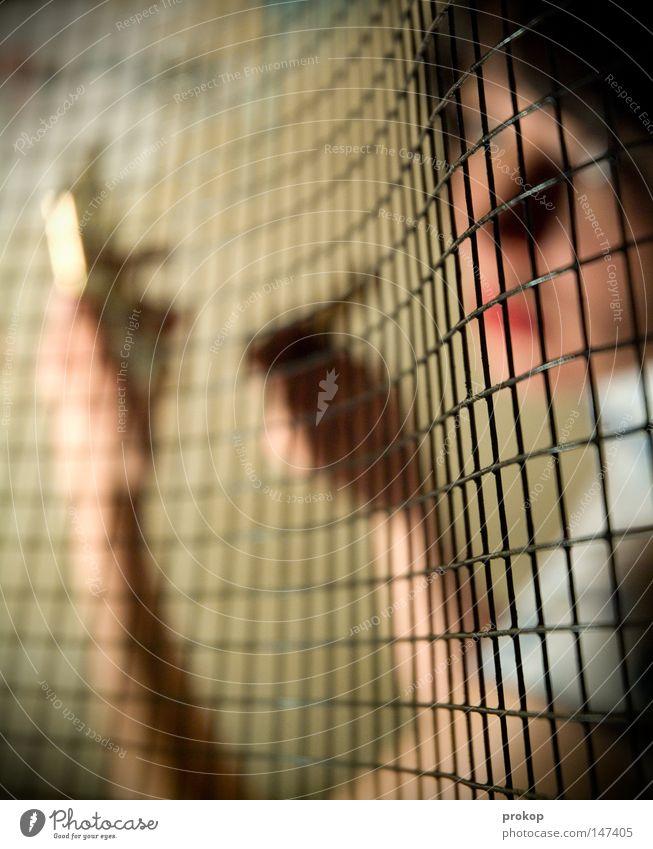 Make up, make down Mund Lippen Frau rot Schminke geschminkt verstecken geheimnisvoll verborgen ruhig Frieden fein zart schön attraktiv Kinn fremd anonym Schal