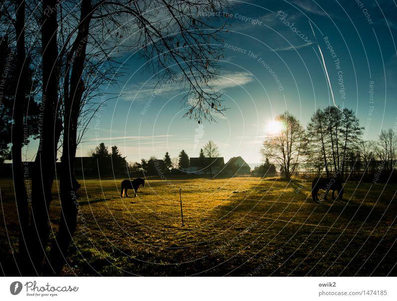 Fressfreunde Umwelt Natur Landschaft Pflanze Tier Himmel Wolken Horizont Klima Schönes Wetter Baum Gras Wiese Weide Pferd 2 Fressen genießen leuchten stehen