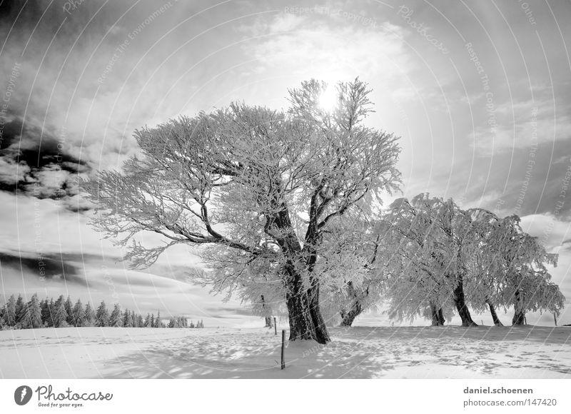 neue Weihnachtskarte 3 Himmel Natur Ferien & Urlaub & Reisen weiß Sonne Baum Einsamkeit Winter kalt Berge u. Gebirge Schnee Hintergrundbild Deutschland Horizont