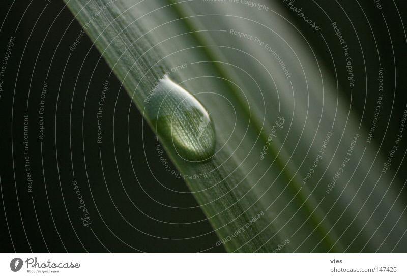 Lupe naturell Strukturen & Formen Single Wasser Wassertropfen Gras nass kleben grün Makroaufnahme Nahaufnahme