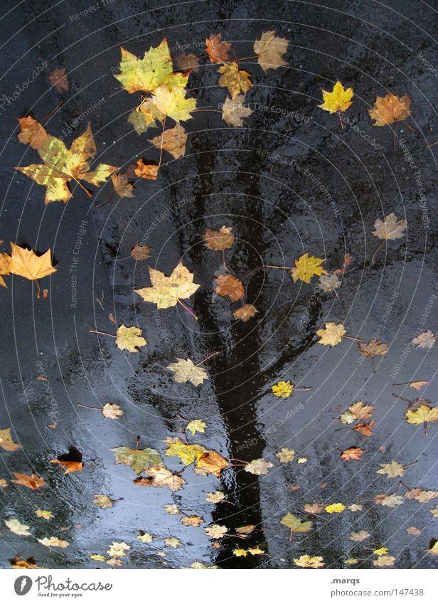 Die Blätter sind gefallen Wasser Baum Blatt Straße kalt Herbst Regen nass Asphalt Vergänglichkeit feucht Sinnbild
