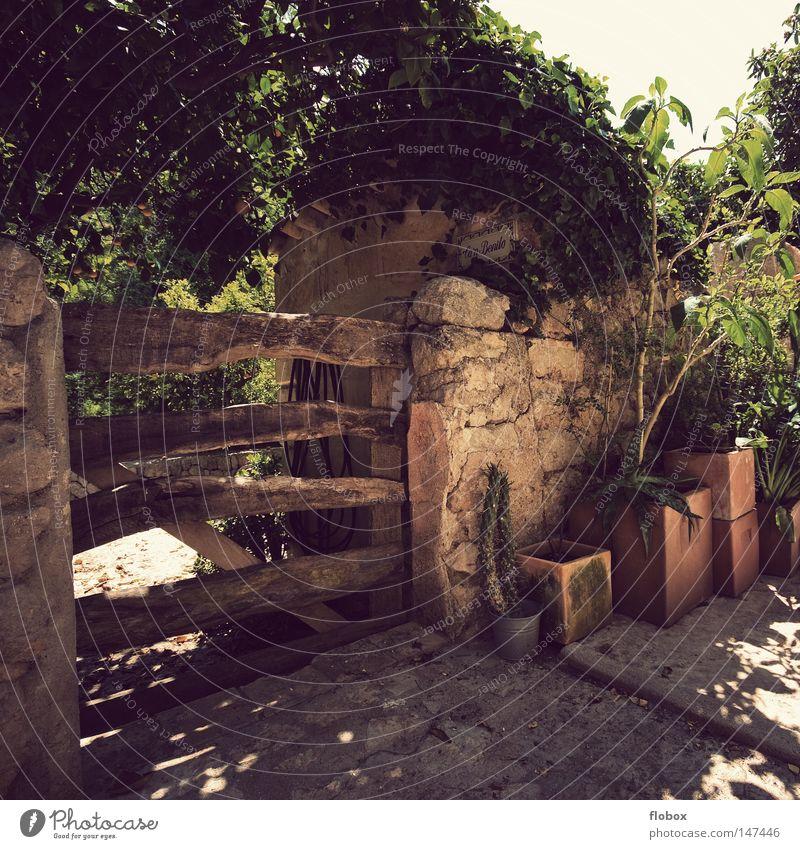 Paradies Mount Eden Pferch Gewächshaus Wachstum Blume Blumentopf Orange Baum Kaktus Holztor Gartenhaus Mauer geheimnisvoll Mallorca Spanien Kleinstadt