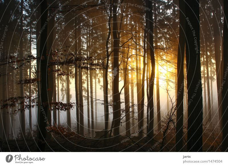 neubeginn Natur Landschaft Sonnenaufgang Sonnenuntergang Sonnenlicht Schönes Wetter Nebel Baum Wald leuchten frisch gruselig hell natürlich schön Wärme