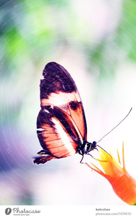 saufen Natur Pflanze Tier Frühling Sommer Schönes Wetter Blüte Garten Park Wiese Wildtier Schmetterling Flügel 1 beobachten Blühend Erholung fliegen Fressen