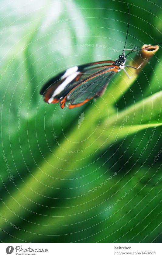 strohhalm Natur Pflanze schön grün Sommer Erholung Blatt Tier Frühling Wiese klein Garten fliegen Park elegant Wildtier