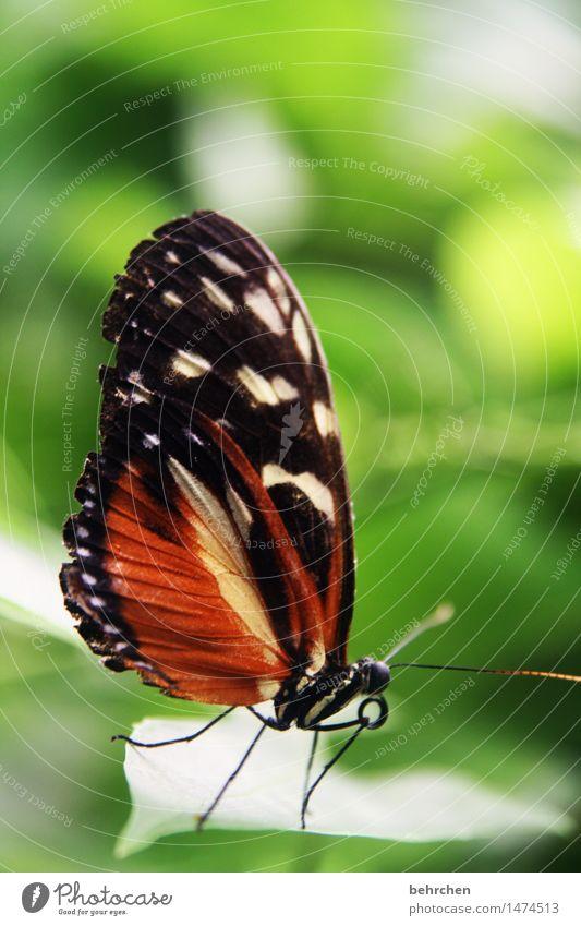schmetterling Natur Pflanze Tier Baum Sträucher Blatt Garten Park Wiese Wildtier Schmetterling Flügel Fühler Rüssel Beine 1 beobachten Erholung fliegen Fressen