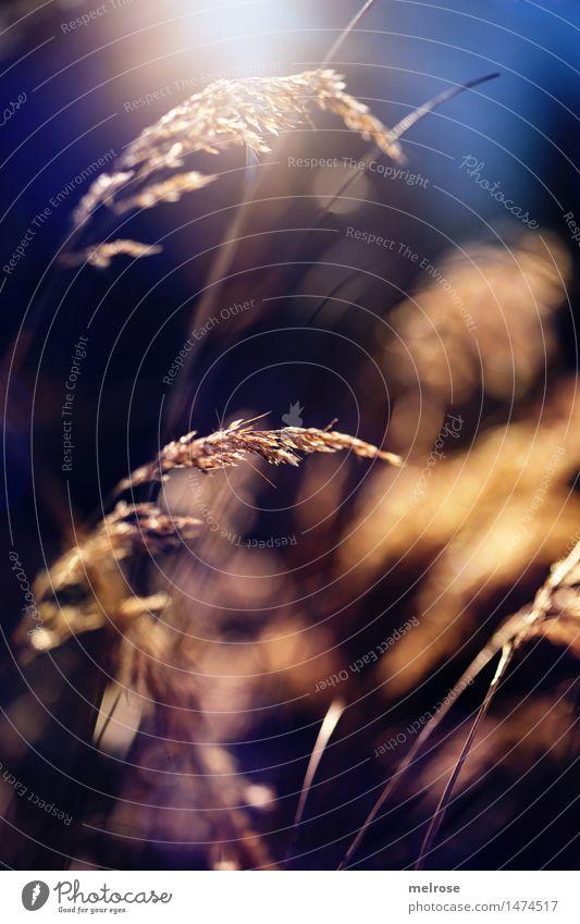 A guats NEICHS ... elegant Stil Design Natur Winter Schönes Wetter Pflanze Gras Wildpflanze Gräserblüte Wald Unschärfe Lichteinfall Lichtspiel Lichtblick
